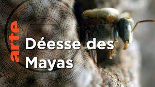 Documentaire Mexique, l'abeille maya   Les maîtres des abeilles