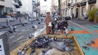 Documentaire Pigeons, le fléau des villes