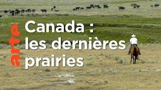 Prairies | Les parcs nationaux canadiens