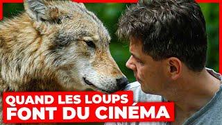 Documentaire Quand les loups font du cinéma