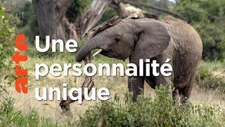 Question de personnalité | Les réseaux sociaux des animaux