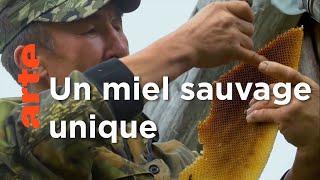 Russie, les cavaliers du miel | Les maîtres des abeilles