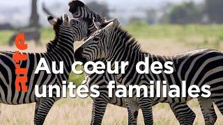 Documentaire Secrets de famille   Les réseaux sociaux des animaux