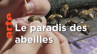 Documentaire Slovénie, le refuge de l'abeille carniolienne   Les maîtres des abeilles