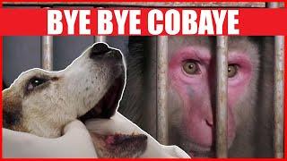 Documentaire Vers la fin des animaux cobayes ?