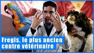 Vétérinaires, au coeur de l'urgence