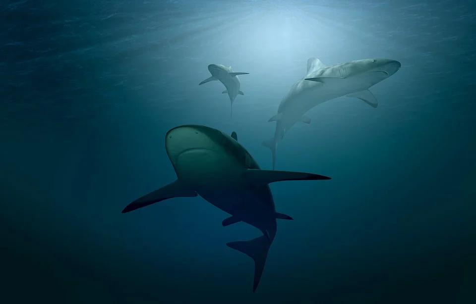 Documentaire Un nouveau documentaire rappelle comment Valerie Taylor a joué avec les requins