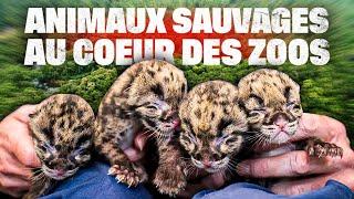 Animaux sauvages, plongée au coeur des zoos
