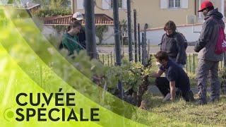 Documentaire Comment les agriculteurs et viticulteurs s'en sortent?
