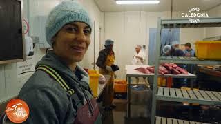Documentaire La pêche au thon : une espèce sous surveillance