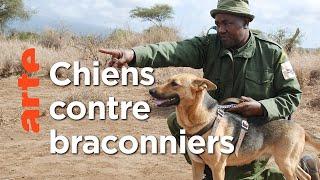 Documentaire Kenya, les chiens au secours des éléphants