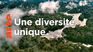 Documentaire L'Amazone, un trésor de biodiversité   Deltas du monde