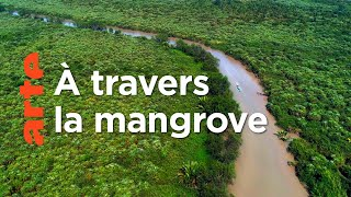 L'Irrawaddy : Le monde fascinant de la mangrove | Deltas du monde