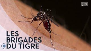 Documentaire La chasse au moustique tigre