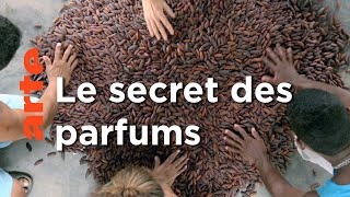 Documentaire La fève Tonka du Venezuela | Tous les parfums du monde