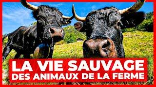 Documentaire La vie sauvage des animaux de la ferme