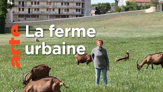 Un défi social, pédagogique et bio à Marseille