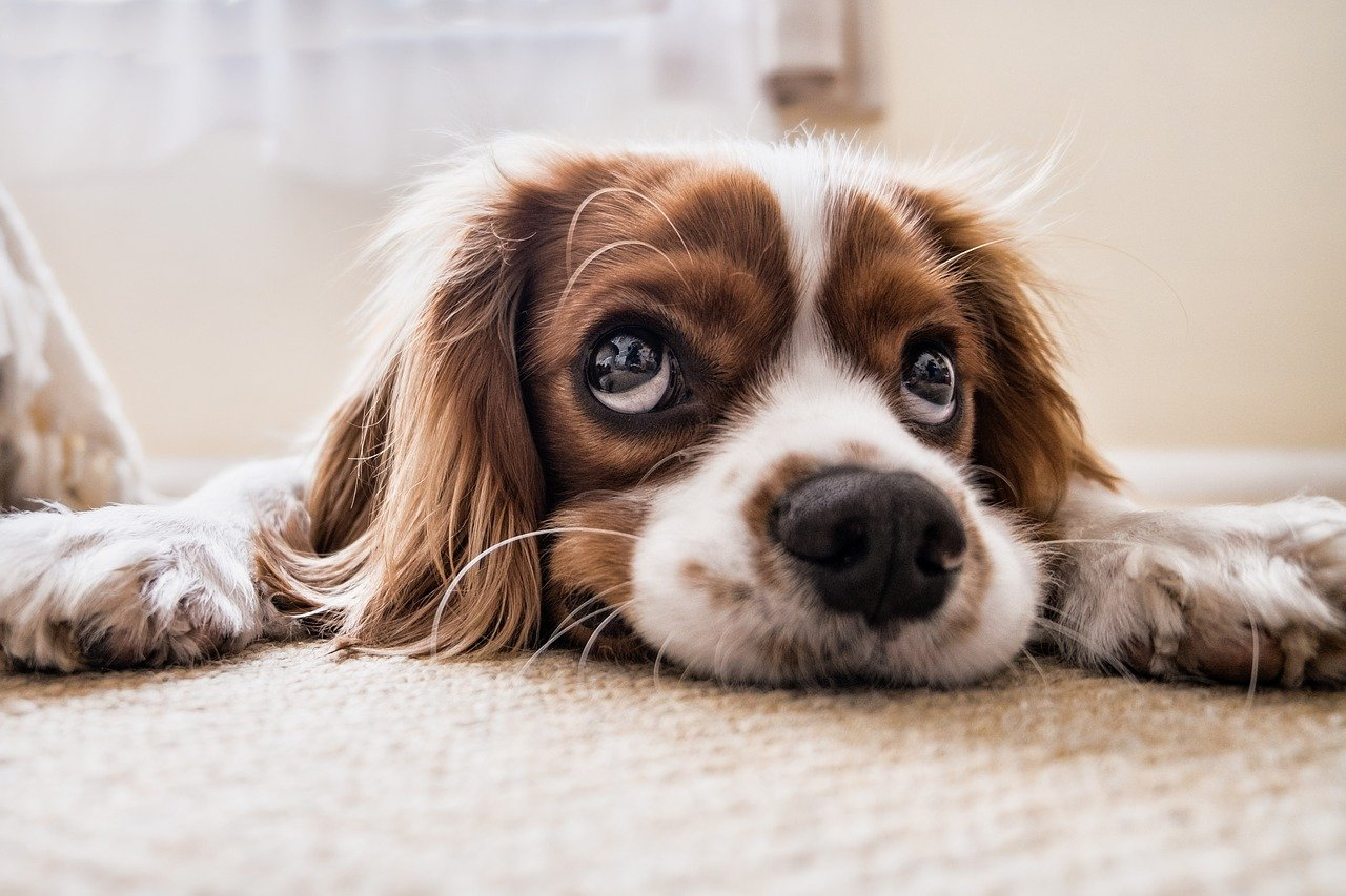 Quelles sont les solutions pour faire garder son animal de compagnie pendant les vacances ?