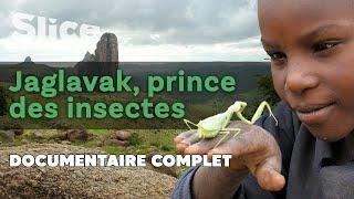 Jaglavak, prince des insectes