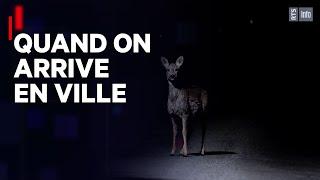 Documentaire La faune dans la ville