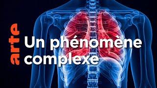 La respiration, une savante mécanique