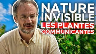 Nature invisible - Les plantes communicantes
