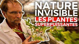 Nature Invisible - Les plantes superpuissantes