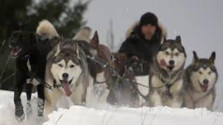 Objectif Yukon Quest, la course de l'extrême