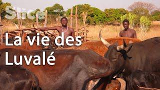 Documentaire Préparation de la cérémonie Mukanda en Zambie