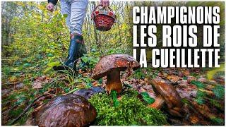 Champignons : les rois de la cueillette !