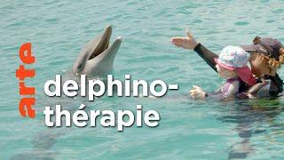 Curaçao, des dauphins thérapeutes