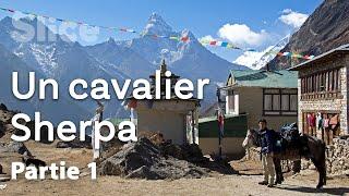 Himalaya : à la recherche du bon cheval