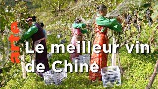 Les vignobles de l'Himalaya | Des vignes et des hommes