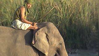 Népal : sur la piste du rhinocéros