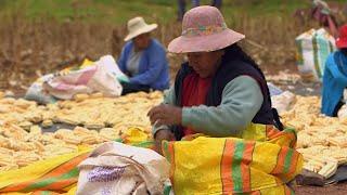 Pérou, voyage au pays du maïs