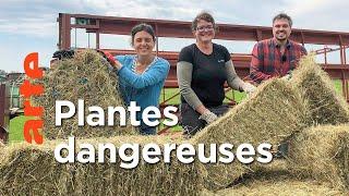 Plantes toxiques : où se cache le danger ?