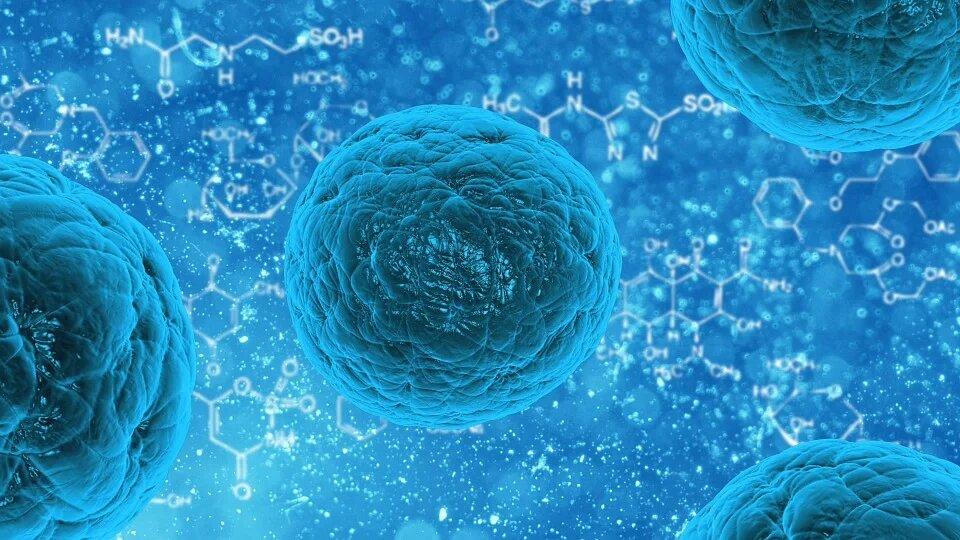 Qu'est-ce que la biocontamination ?